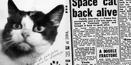 FIRST CAT IN OUTER SPACE